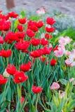 Различный цветок на саде лобковом Стоковая Фотография RF