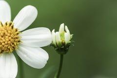 Различный цветок Стоковая Фотография RF