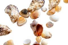Различный seashells Стоковые Изображения