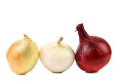 3 различных вида луков Стоковое Изображение