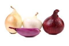 4 различных вида луков. Стоковое Изображение RF