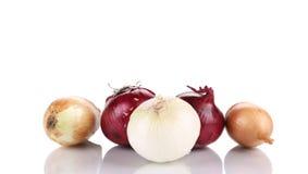3 различных вида луков Стоковые Изображения