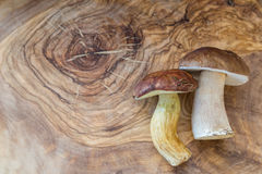 2 различных гриба на доске Стоковые Фото