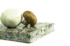2 различных гриба Стоковое Изображение