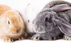 3 различных кролика Стоковое Изображение RF