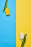 2 различных тюльпана с космосом экземпляра Стоковое Фото