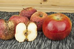 2 различных яблока, свежий и вянуть Moldy яблоко как концепция проблем кожи Стоковое Изображение RF