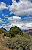 Район дикой природы каньона Salt River, национальный лес Tonto, Gila County, Аризона, Соединенные Штаты стоковое изображение rf