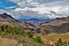 Район дикой природы каньона Salt River, национальный лес Tonto, Gila County, Аризона, Соединенные Штаты стоковая фотография rf