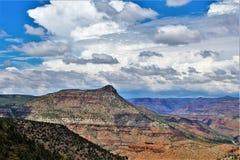 Район дикой природы каньона Salt River, национальный лес Tonto, Gila County, Аризона, Соединенные Штаты стоковое изображение