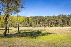Район леса Вертел Curonian национального парка Стоковая Фотография RF