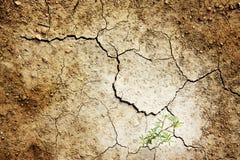 район неорошаемого земледелия Стоковые Изображения