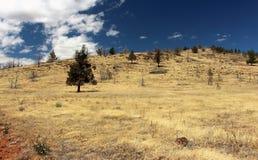 район неорошаемого земледелия деревьев стоковые фото