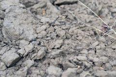 район неорошаемого земледелия Стоковая Фотография RF