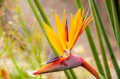 Райская птица в ботаническом саде стоковые фотографии rf