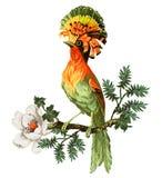 Райская птица и экзотические цветки иллюстрация вектора