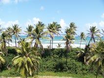 Рай Бразилия океанских волн пляжа побережья Стоковая Фотография RF
