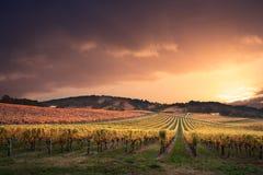 Рай виноградника Стоковые Фотографии RF