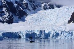 рай гавани Антарктики Стоковое Изображение RF