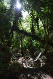 Рай гамака Стоковое фото RF