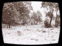 Рай зимы Стоковые Фотографии RF