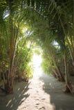 рай к путю Мальдивские острова Стоковое Изображение