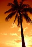 Рай пальмы захода солнца стоковое фото rf