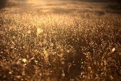 рай поля Стоковое Изображение