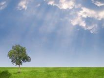 рай поля Стоковая Фотография