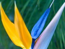 рай птицы Стоковая Фотография