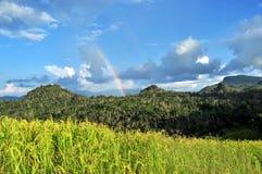 Рай радуги стоковые фотографии rf