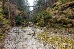 Рай Словакии - каньон реки Sucha Biela с туристским путем Пеший туризм в каньоне реки, лесные деревья на сторонах Beautif стоковое изображение