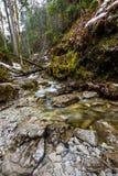 Рай Словакии - каньон реки Sucha Biela с туристским путем Пеший туризм в каньоне реки, лесные деревья на сторонах Beautif стоковое фото
