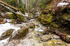 Рай Словакии - каньон реки Sucha Biela с туристским путем Пеший туризм в каньоне реки, лесные деревья на сторонах Beautif стоковые изображения
