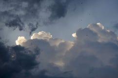 Рай с птицей Стоковые Изображения RF