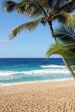 рай тропический Стоковое Фото
