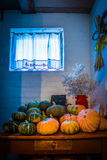 Рай тыквы Стоковое Изображение RF