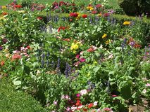 Рай цветка Стоковая Фотография