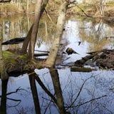 рай черепахи стоковое изображение rf