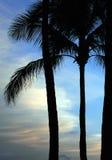 рай 02 Стоковая Фотография