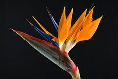 рай iv птицы стоковое фото rf