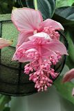 Рай Keukenhof цветка в Нидерландах Стоковые Фото