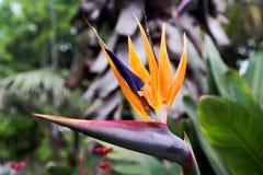 рай tenerife Канарских островов птицы Стоковое фото RF