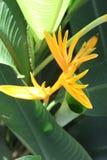 рай tenerife Канарских островов птицы Стоковое Изображение RF
