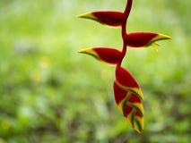 рай tenerife Канарских островов птицы Стоковое Изображение