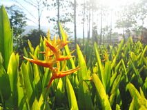 рай tenerife Канарских островов птицы Стоковые Фотографии RF