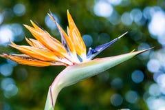 рай tenerife Канарских островов птицы Стоковое Фото