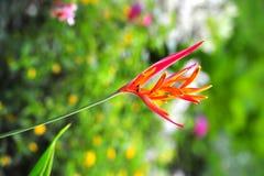 рай tenerife Канарских островов птицы Стоковые Изображения RF