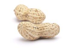 раковина арахиса Стоковая Фотография