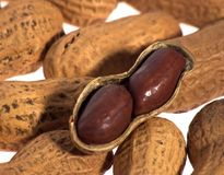 раковина арахисов Стоковые Фото